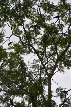 How many hornbills can you spot