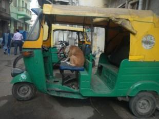 The coolest autorikshaw driver