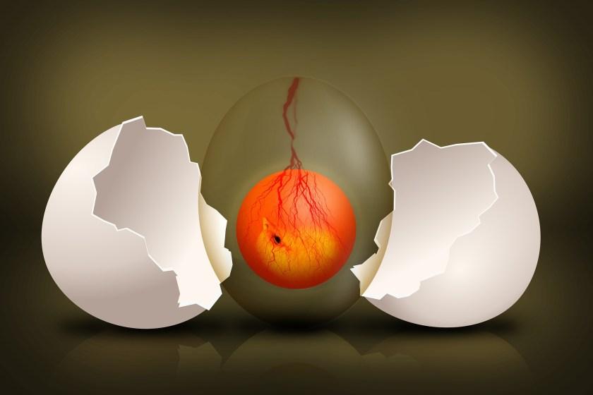 Eggs yolk and albumen embrio