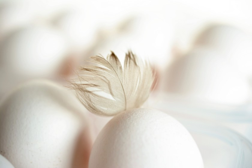 To maintain quality, many packers not only keep eggs well chilled, but also spray the eggs with a fine mist of tasteless mineral oil, which retards not only air penetration but alkalization. That's where our egg-peeling difficulties lie: the sprayed egg won't get stale, which brings us to our first principle.