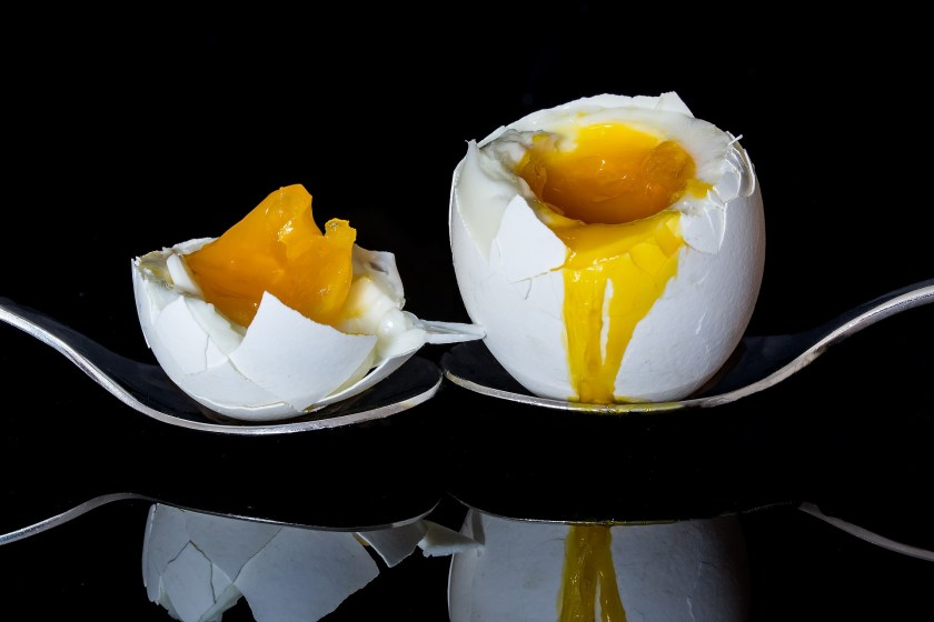 On the other hand, if your eggs are stale but still edible you are not likely to produce perfectly shaped hard-boiled eggs with perfectly centered yolks – again, if that is of any importance to you.  Why?  Because the air pocket at the large end of the shell has become enlarged, and you will have a lop-ended boiled egg; at the same time the white will have relaxed, and the yolk will hang off center.  You can do nothing about filling the air pocket, but some people do believe that if you stir the eggs about as they cook you may re-center the yolk.