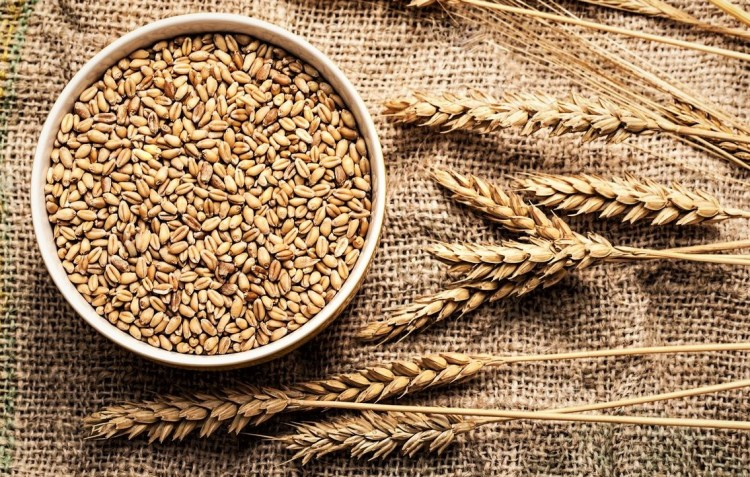 differences between durum wheat and soft wheat