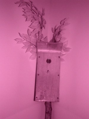 Infrared photo of birdhouse spycam