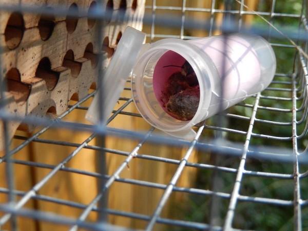emerging in tube
