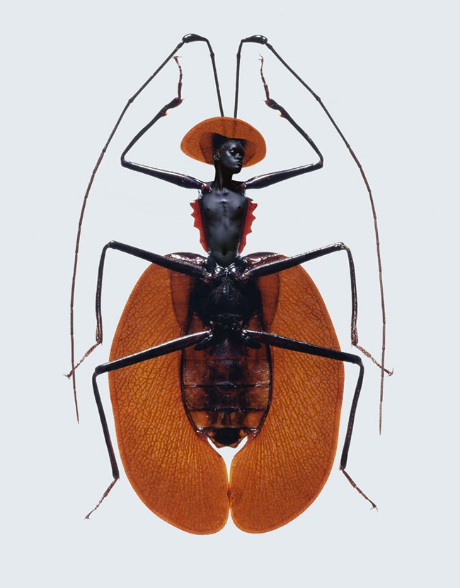 23_insectpunaise