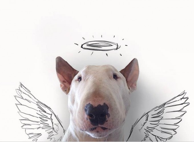 rafael-mantesso-bull-terrier-1
