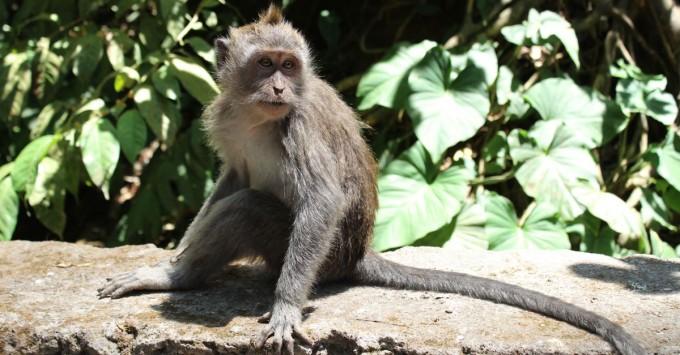 Cute (?) Monkey in the Monkey Forest