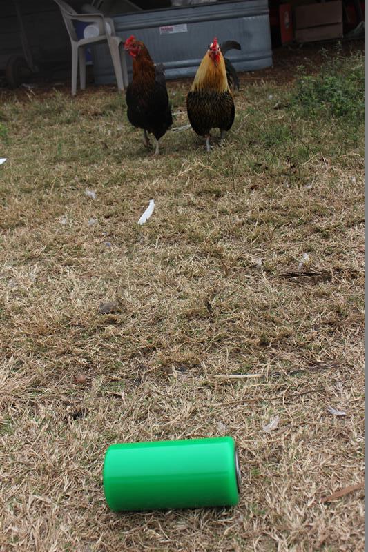 Blue Heron unamused chickens