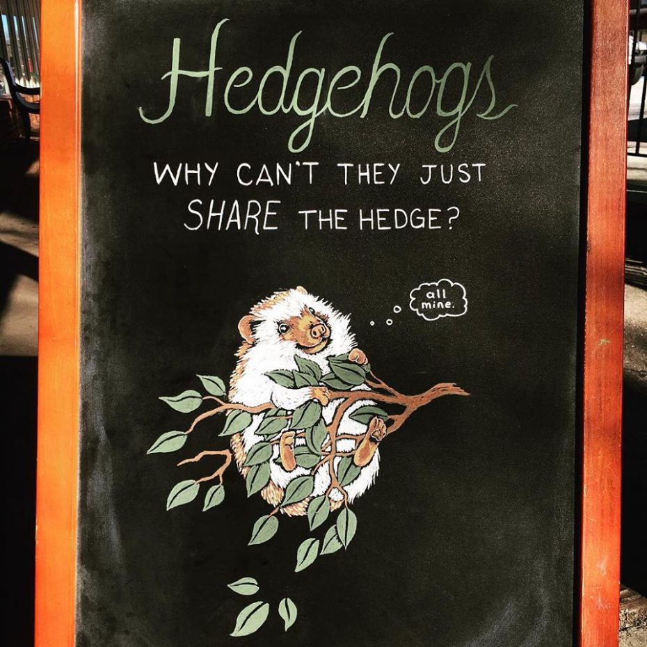 14 - Hedgehogs