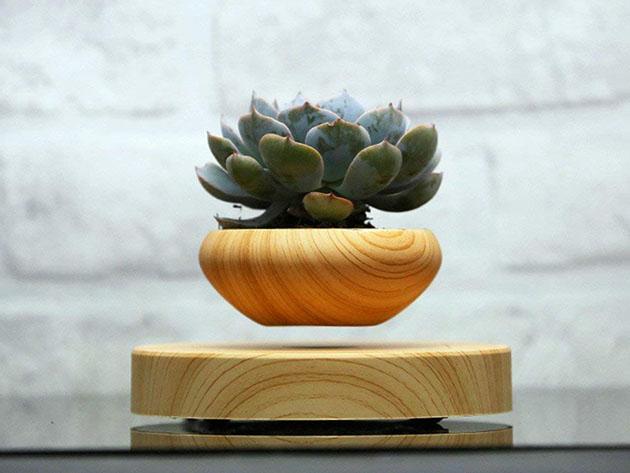 Take half off this gravity-defying bonsai tree pot