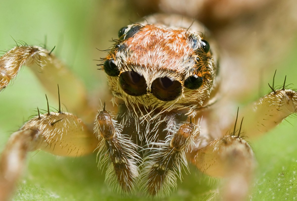 Some male spiders tie up females before sex so they don't get eaten alive | Boing Boing