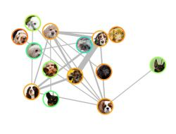 Screenshot of interactive dataviz in the Guardian showing how dogs are related