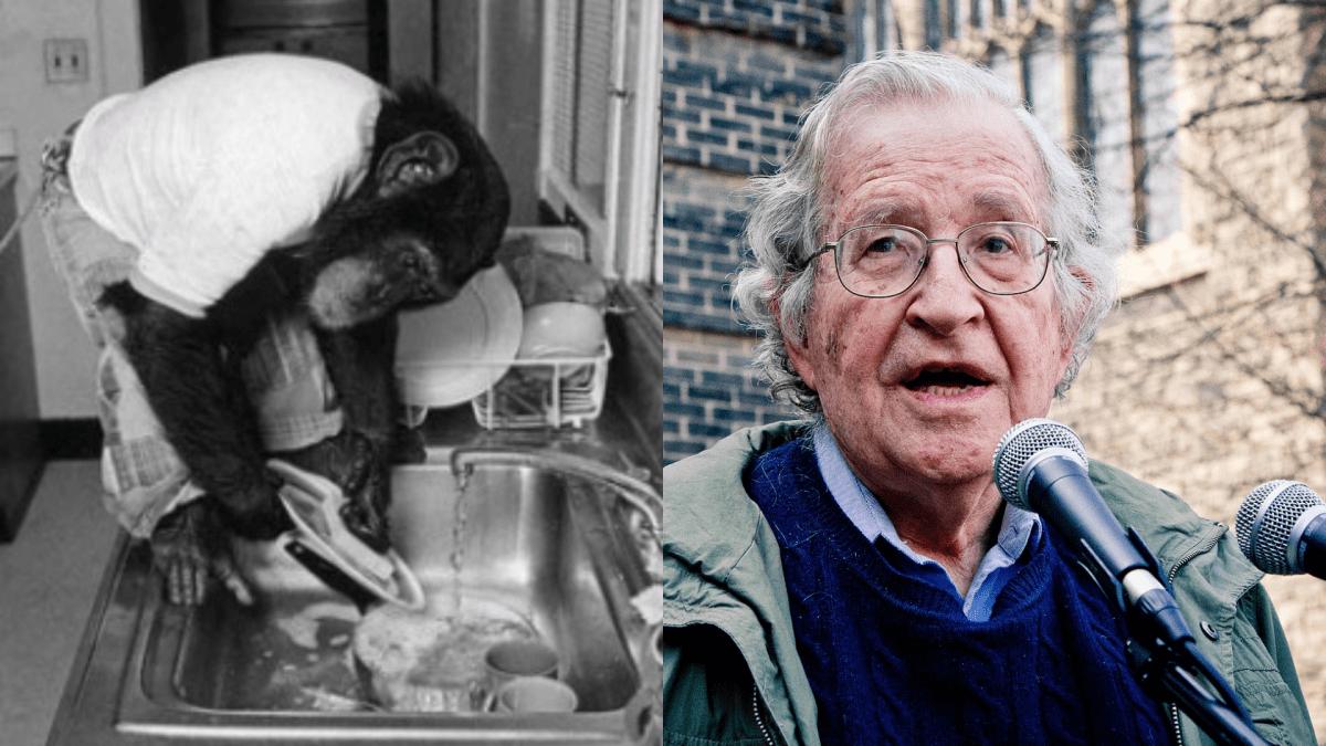 Noam Chomsky on Nim Chimpsky and the emergence of language   Boing Boing