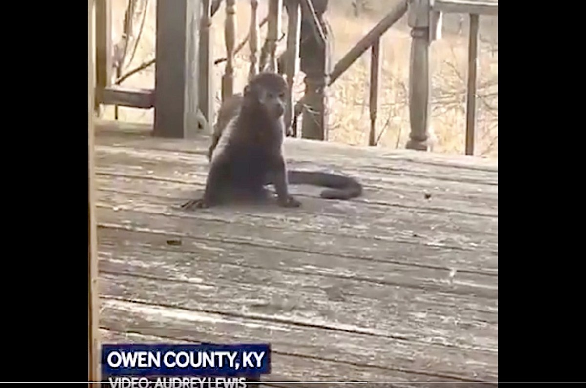 "A Kentucky man finds a mysterious ""super friendly"" monkey on his porch 