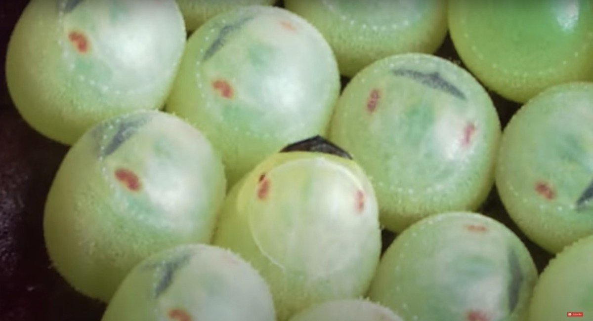 Watch this incredible close-up video of 1mm stink bug eggs hatching | Boing Boing