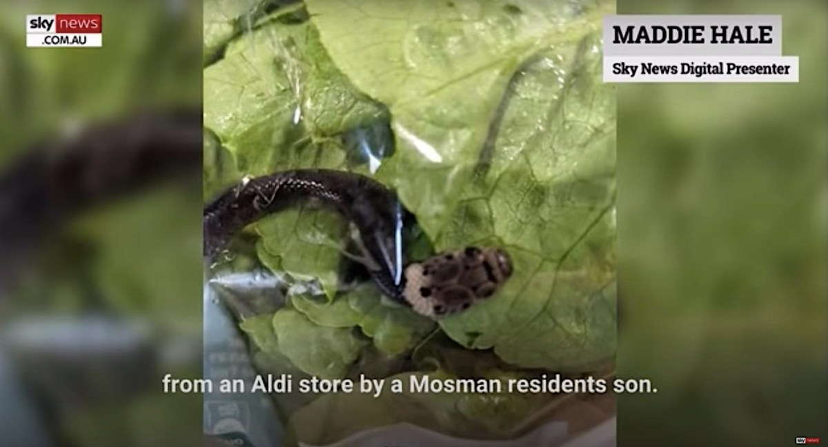 Shoppers in Australia find a live venomous snake in their bag of lettuce | Boing Boing