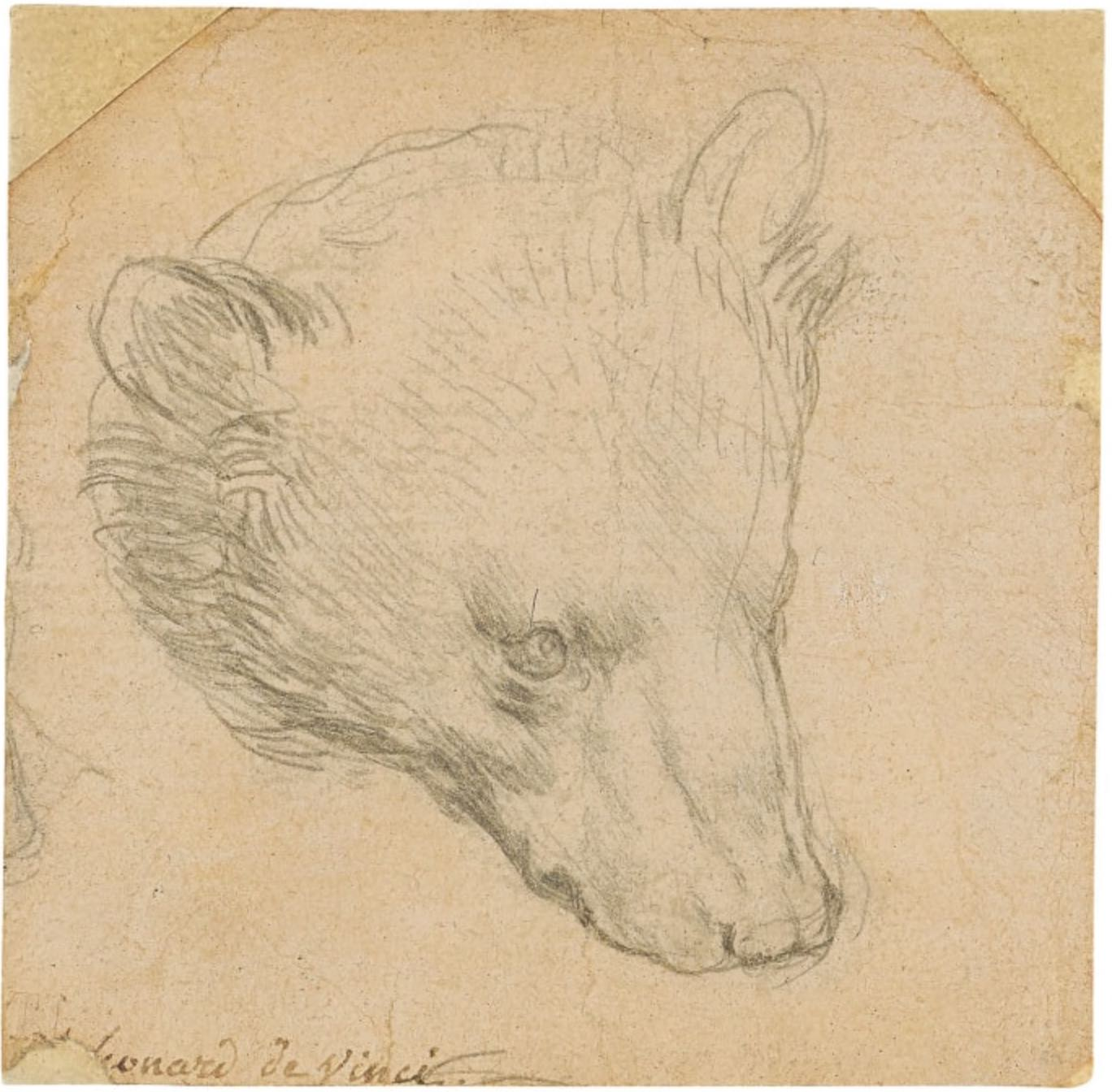 This small Leonardo da Vinci sketch of a bear expected to sell for $16 million