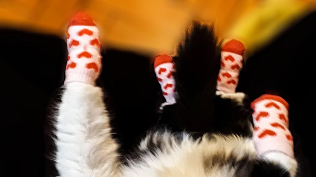 Watch a cat fling off socks in 10 seconds flat | Boing Boing