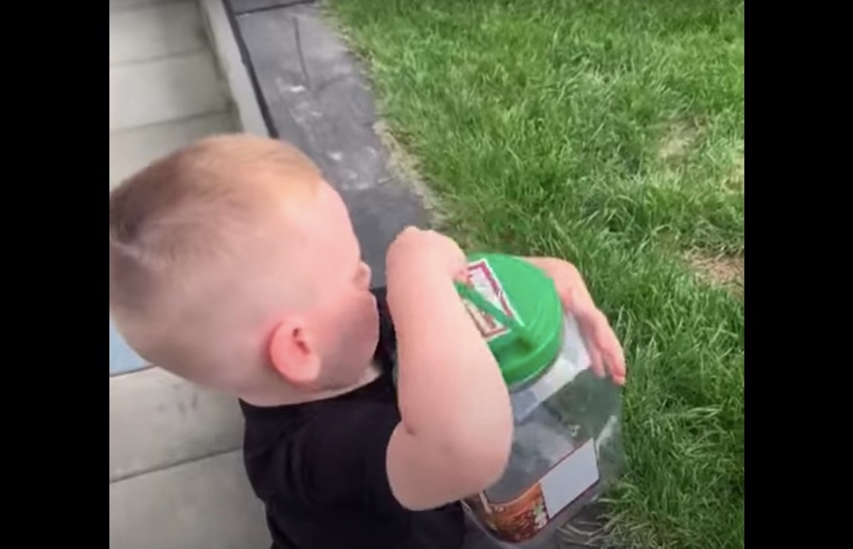 Watch: A boy sets a butterfly free, only to see it gobbled up by the family dog | Boing Boing