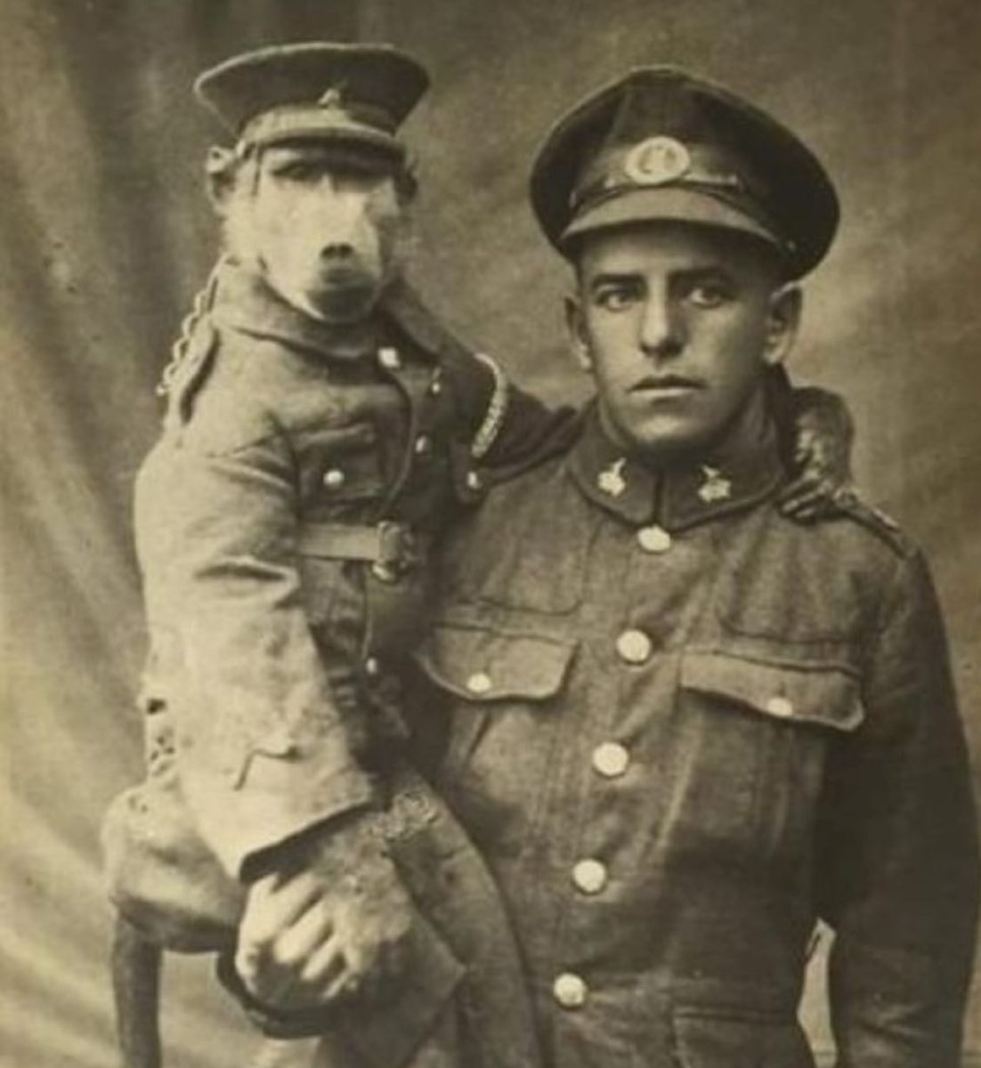 Meet Jackie, the baboon war hero who became a corporal | Boing Boing