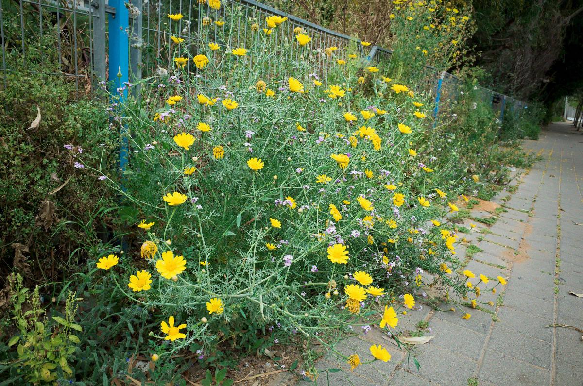 Flowers along the street in Tel Aviv