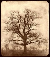 Dark Oak Tree