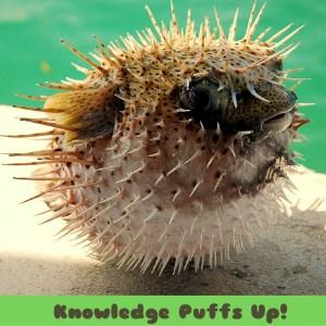 knowledge puffs