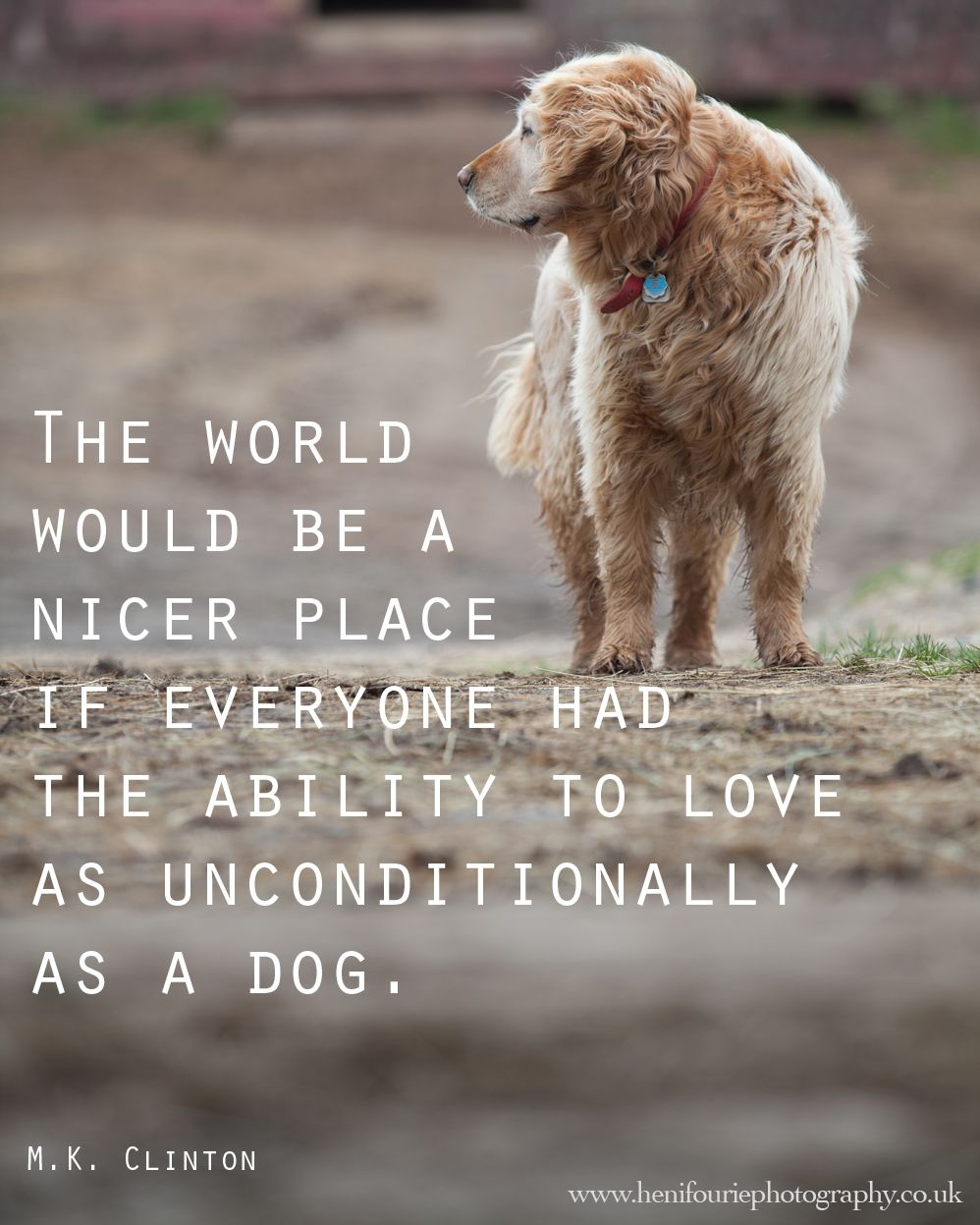 Man's Best Friend Quotes : man's, friend, quotes, Quotes, About, Friend, Twitter, Bokkor