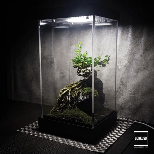 Terrarium Premna Bonsai Scape