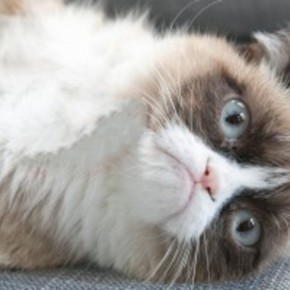 GrumpyCatMashable-357x200