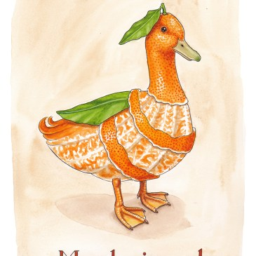 mandarinand illustration ordvits