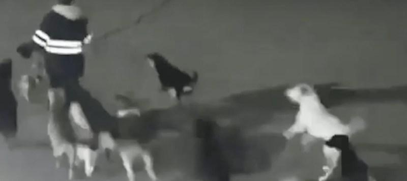 野犬に追いかけられる女性
