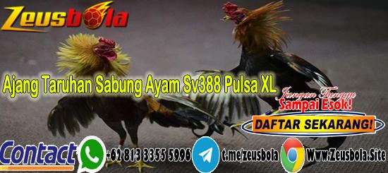 Ajang Taruhan Sabung Ayam Sv388 Pulsa XL