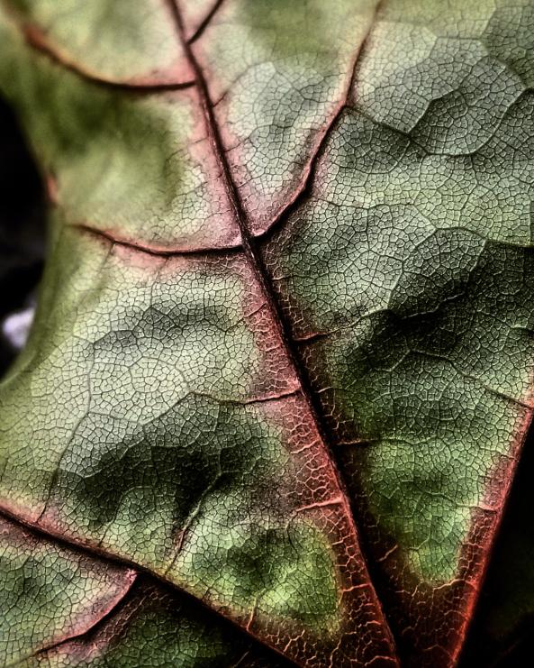 Resized Color Leaf Closeup