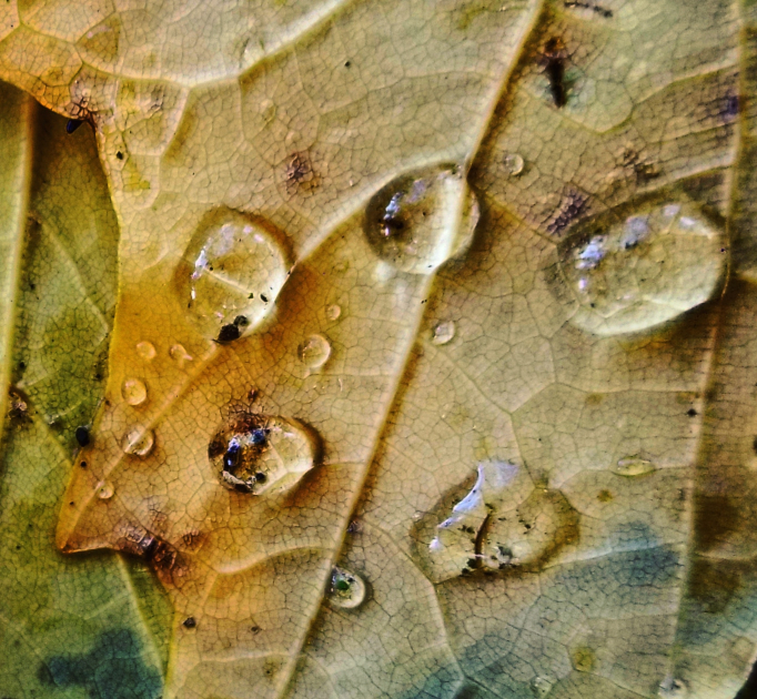 Resized Color water droplets on a leaf