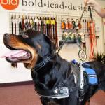 Amahle Garner - Service Dogs in Action