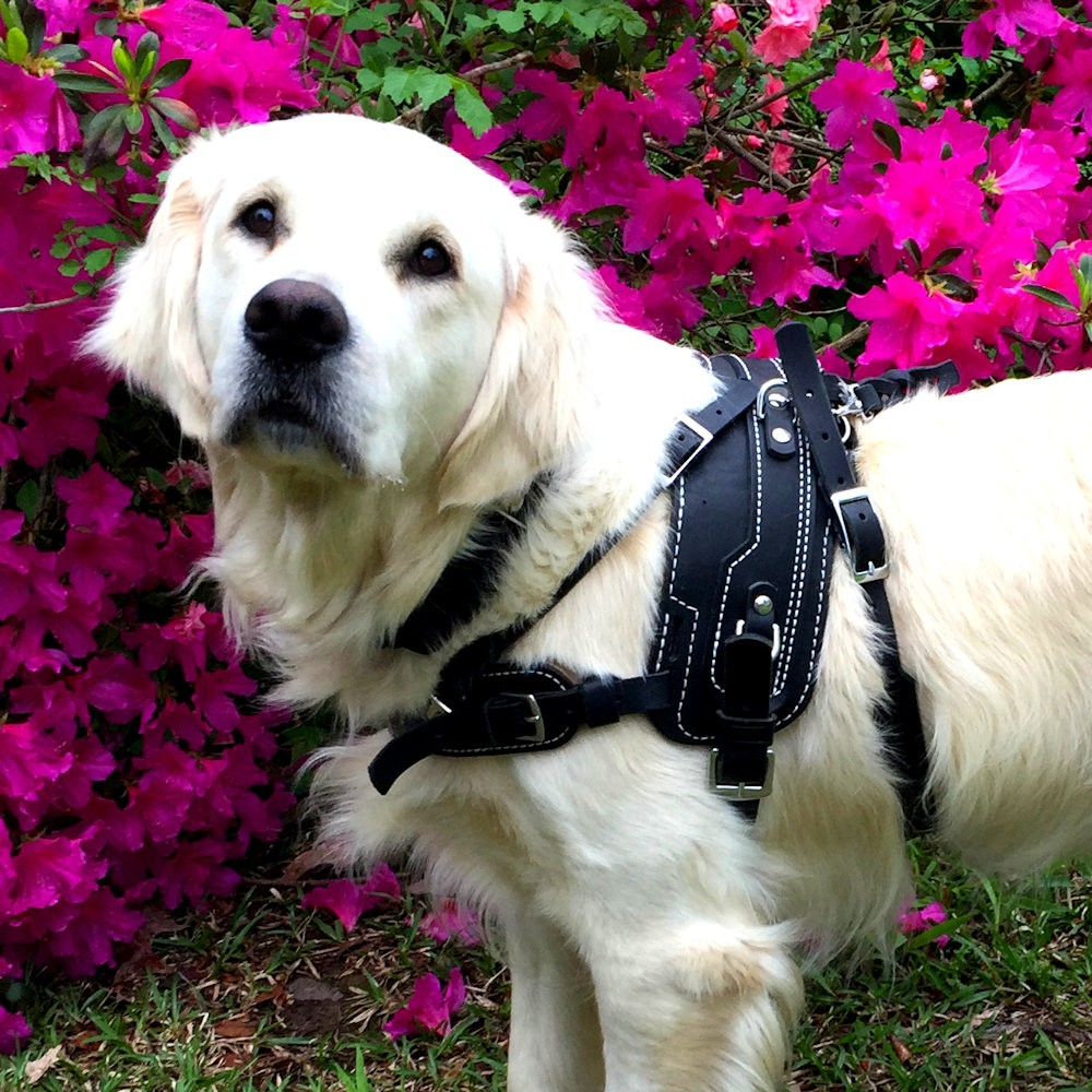 Balance Assistance Harness For Service Dogs Bold Lead Designs