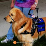 Bently MSH PP - Service Dogs in Action