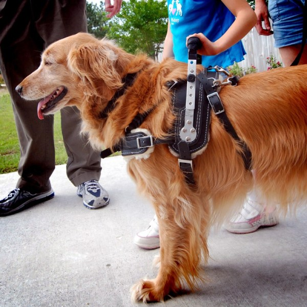 Mobility istance Dog Harness - Vtwctr