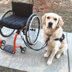 Wheelchair Dog Baby Highchair 3 In 1 Hook For Attaching Your Leash Bold Lead Designs