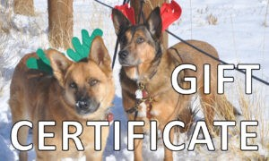 GIFT CERTIFICATE 300x180 - Home