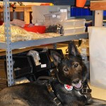 Service Dog CAPTAIN in BLD shop 2740 - BLD Workshop & Production Photos