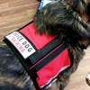 small vest with chest strap3121 - Service Dog Cape/Vest