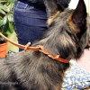 Airport Lead on Kepler 2945 - The Airport Lead™ -- a metal-free leather leash & collar for travel (no leash snap)