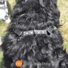 Connected Control™ Harness: a Leather no-pull dog walking harness (2-point, front-clip design)