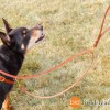 taz no pull with leash 0092 - Connected Control™ Harness: a Leather no-pull dog walking harness (2-point, front-clip design)