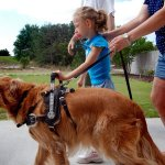 amanda is walking 115 small - Service Dogs in Action