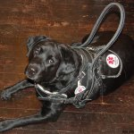 bah alpine - Service Dogs in Action