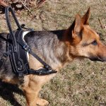 bah faber - Service Dogs in Action