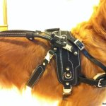 basic guide detachable handle bradley - Service Dogs in Action
